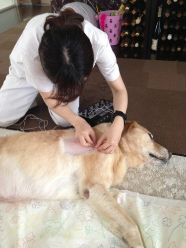 Quinta receiving acupuncture treatment.