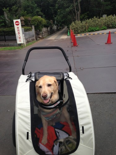 Quinta in his buggy.