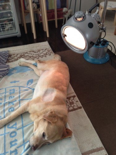 Quinta having light therapy.
